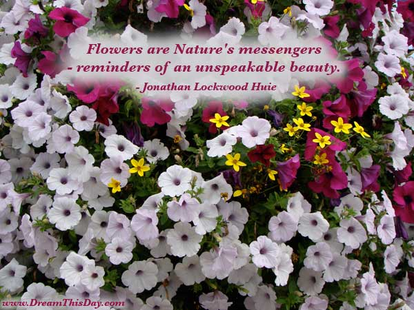 daily inspiration daily quotes nature s messengers